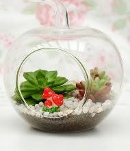 Küçük elma terrarium 3 kaktüs  Gölbaşı ankara çiçek gönderme sitemiz güvenlidir
