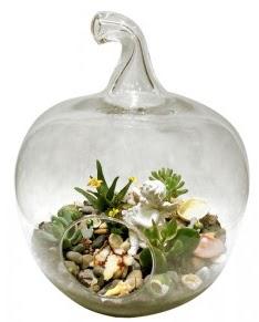 Orta boy elma terrarium 5 kaktüs  Gölbaşı Ankara çiçek yolla