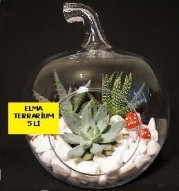 5 kaktüslü Elma terrarium orta boy  Gölbaşı ankara çiçek gönderme sitemiz güvenlidir