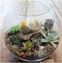 Cam fanusta 7 kaktüslü terrarium  Gölbaşı çiçek kaliteli taze ve ucuz çiçekler