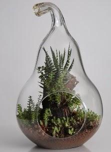 Armut cam küçük boy terrarium  Çiçekçi Gölbaşı çiçekçi mağazası