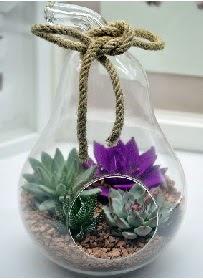 Orta boy armut 3 kaktüs terrarium  Gölbaşı çiçek siparişi yurtiçi ve yurtdışı çiçek siparişi