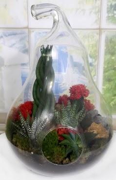 5 adet kaktüs orta boy armut terrarium  Gölbaşı çiçekçi güvenli kaliteli hızlı çiçek