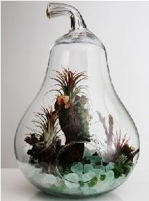 Orta boy Armut 6 adet kaktüs terrarium  Gölbaşı çiçek kaliteli taze ve ucuz çiçekler