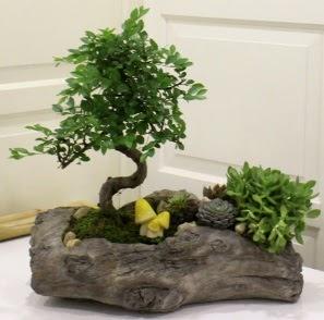 Ağaç kütük içerisinde Bonsai ve Kaktüs  Gölbaşı çiçek siparişi yurtiçi ve yurtdışı çiçek siparişi