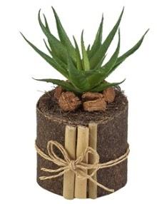 Doğal kütük içerisinde 1 adet kaktüs  Gölbaşı ankara çiçek servisi , çiçekçi adresleri