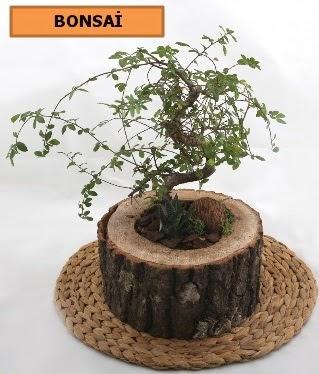 Doğal ağaç kütük içerisinde bonsai bitkisi  Gölbaşı çiçek gönder cicekciler , cicek siparisi