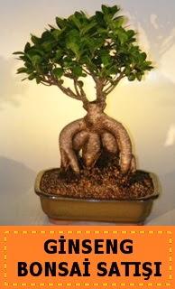 Ginseng bonsai satışı japon ağacı  Gölbaşı Ankara çiçek yolla