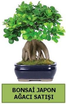 Bonsai japon ağacı satışı  Ankara Gölbaşı hediye sevgilime hediye çiçek