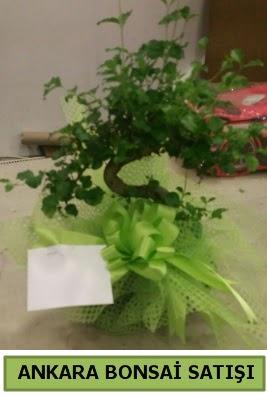 Bonsai saksı bitkisi satışı  Gölbaşı ankara çiçek servisi , çiçekçi adresleri