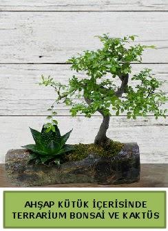Ahşap kütük bonsai kaktüs teraryum  Gölbaşı çiçek yolla , çiçek gönder , çiçekçi