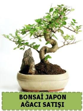 Bonsai japon  ağacı satışı Minyatür İthal  Gölbaşı çiçek yolla , çiçek gönder , çiçekçi