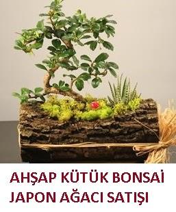 Ahşap kütük içerisinde bonsai ve 3 kaktüs  Gölbaşı çiçek kaliteli taze ve ucuz çiçekler