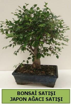 Minyatür bonsai japon ağacı satışı  Gölbaşı çiçek gönder cicekciler , cicek siparisi