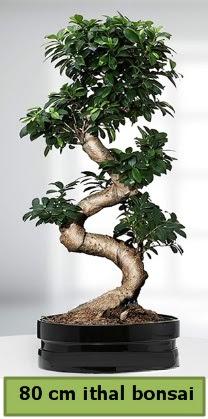 80 cm özel saksıda bonsai bitkisi  Gölbaşı anneler günü çiçek yolla