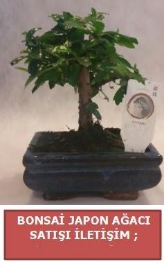 Japon ağacı minyaür bonsai satışı  Ankara Gölbaşı hediye sevgilime hediye çiçek