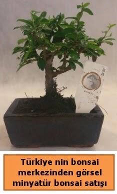 Japon ağacı bonsai satışı ithal görsel  Ankara Gölbaşı çiçekçi uluslararası çiçek gönderme