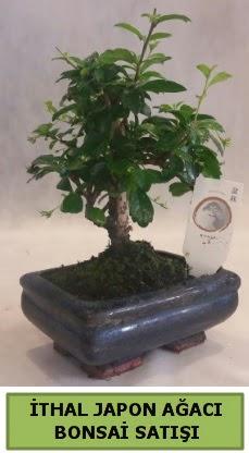 İthal japon ağacı bonsai bitkisi satışı  Gölbaşı anneler günü çiçek yolla