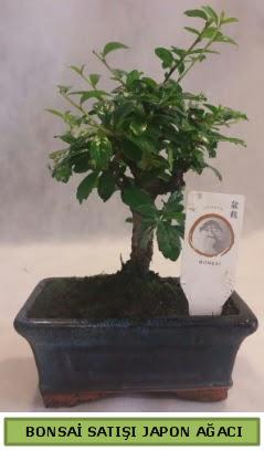 Minyatür bonsai ağacı satışı  Ankara Gölbaşı 14 şubat sevgililer günü çiçek