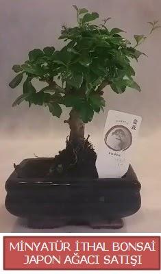 Küçük görsel bonsai japon ağacı bitkisi  Gölbaşı çiçek online çiçek siparişi