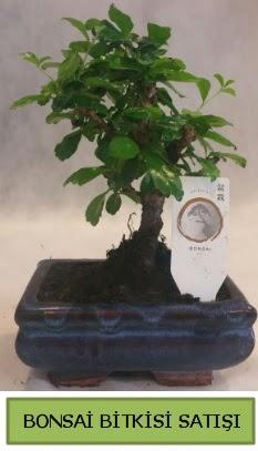 Bonsai ithal görsel minyatür japon ağacı  Gölbaşı ankara çiçek servisi , çiçekçi adresleri