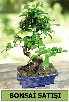 Çam bonsai japon ağacı satışı  Ankara Gölbaşı hediye sevgilime hediye çiçek