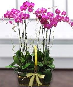 7 dallı mor lila orkide  Gölbaşı çiçek gönder cicekciler , cicek siparisi