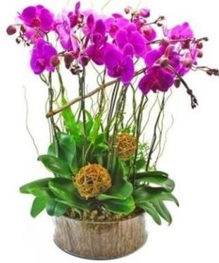 Ahşap kütükte lila mor orkide 8 li  Gölbaşı çiçek siparişi yurtiçi ve yurtdışı çiçek siparişi