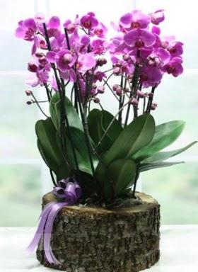 Kütük içerisinde 6 dallı mor orkide  Gölbaşı ankara çiçek servisi , çiçekçi adresleri