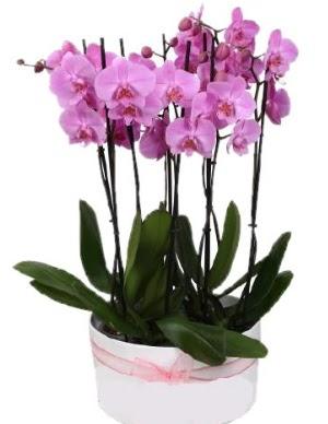 Beyaz seramik içerisinde 7 dallı mor orkide  Gölbaşı anneler günü çiçek yolla