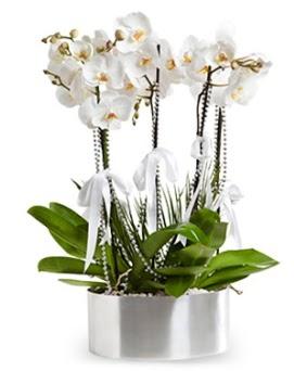 Beş dallı metal saksıda beyaz orkide  Ankara Gölbaşı çiçekçi uluslararası çiçek gönderme