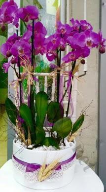Seramik vazoda 4 dallı mor lila orkide  Gölbaşı ankara çiçek gönderme sitemiz güvenlidir