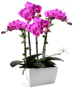 Seramik vazo içerisinde 4 dallı mor orkide  Ankara Gölbaşı hediye sevgilime hediye çiçek