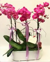 Beyaz seramik içerisinde 4 dallı orkide  Gölbaşı ankara çiçek servisi , çiçekçi adresleri