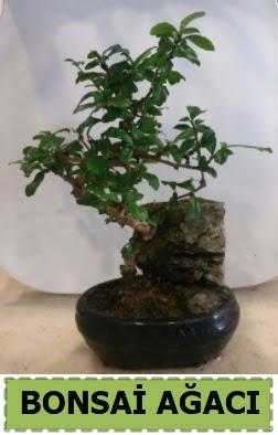 Bonsai ağacı japon ağacı satışı  ankara Gölbaşı çiçek mağazası , çiçekçi adresleri