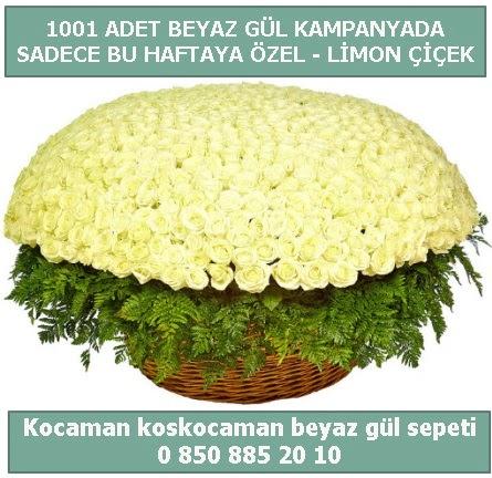 1001 adet beyaz gül sepeti özel kampanyada  Gölbaşı çiçek gönder cicekciler , cicek siparisi