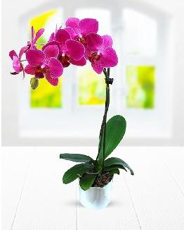 Tek dallı mor orkide  Ankara Gölbaşı hediye sevgilime hediye çiçek