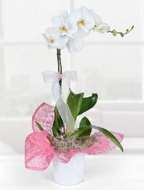 Tek dallı beyaz orkide seramik saksıda  Ankara Gölbaşı 14 şubat sevgililer günü çiçek