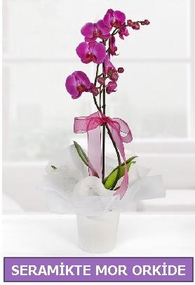 Seramik içerisinde birinci kalite tek dallı mor orkide  Ankaradaki çiçekçiler Gölbaşı cicek , cicekci