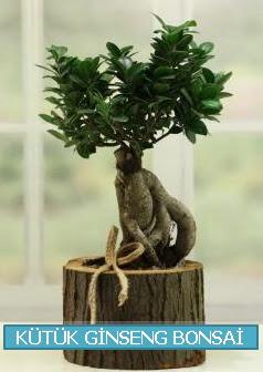 Kütük ağaç içerisinde ginseng bonsai  Gölbaşı çiçek gönder cicekciler , cicek siparisi