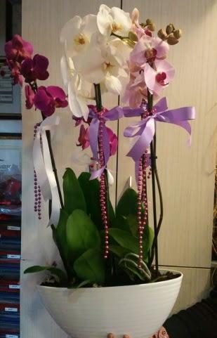 Mor ve beyaz ve pembe 6 dallı orkide  Gölbaşı ankara çiçek servisi , çiçekçi adresleri