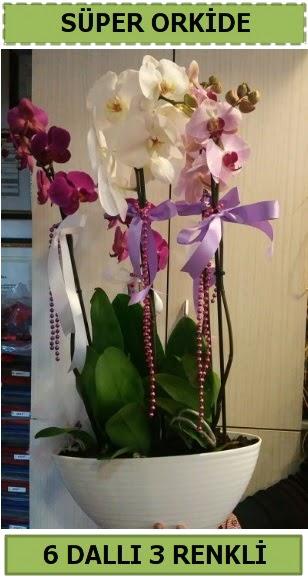 6 dallı 3 renk özel vazoda orkide çiçeği  Ankara Gölbaşı hediye sevgilime hediye çiçek