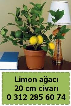 Limon ağacı bitkisi  Gölbaşı anneler günü çiçek yolla