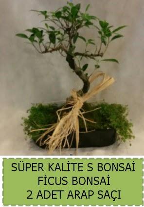 Ficus S Bonsai ve arap saçı  Gölbaşı anneler günü çiçek yolla