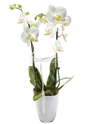 2 dallı beyaz seramik beyaz orkide saksısı  Gölbaşı çiçek gönder cicekciler , cicek siparisi