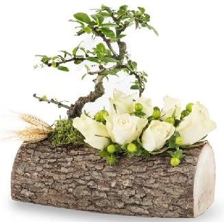 Doğal kütükte bonsai ağacı ve 7 beyaz gül  Gölbaşı çiçek gönder cicekciler , cicek siparisi