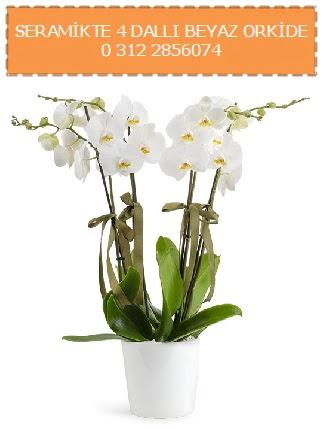 Seramikte 4 dallı beyaz orkide  Gölbaşı çiçek yolla online çiçekçi , çiçek siparişi
