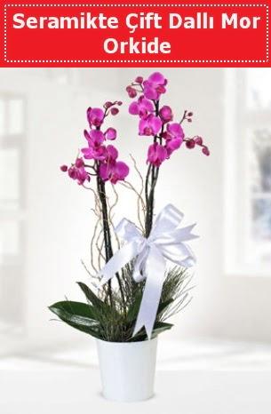 Seramikte Çift Dallı Mor Orkide  Gölbaşına çiçek , çiçekçi , çiçekçilik