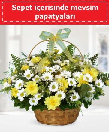 Sepet içerisinde mevsim papatyaları  Gölbaşı ankara çiçek servisi , çiçekçi adresleri