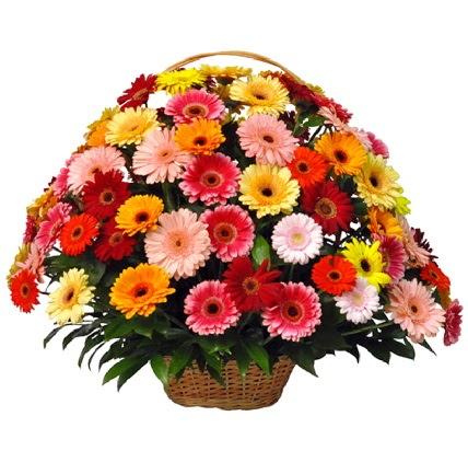 Karışık renkli büyük gerbera sepet aranjmanı  Gölbaşı çiçek gönder cicekciler , cicek siparisi
